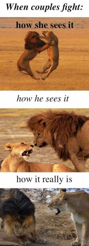 Funny lion and lioness picture