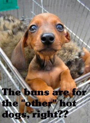 hilarious dog pic