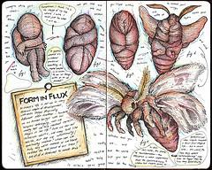 ... drawing moth kafka pupa metamorphosis pupae kafkaesque moleskineentry