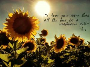 Sunflowers Tumblr Quotes Sunflowers tumblr