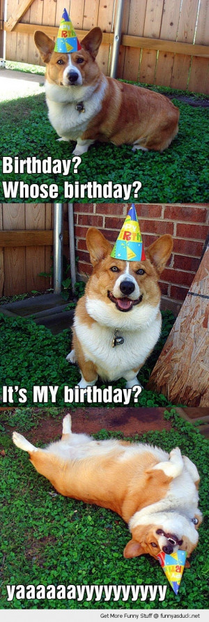 happy birthday dog animal party hat rolling grass funny pics pictures ...