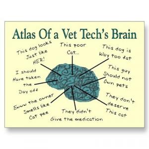 Vet Tech brain, true story.