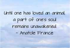 ... lose your dog, cat, or other beloved animal companion. #petloss #dogs
