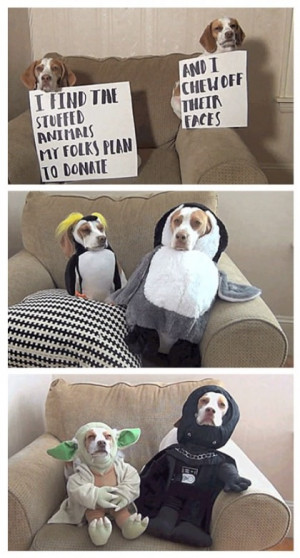 Funniest Dog Costume Ever Batman Lol Funny Pictures Quotes Picture