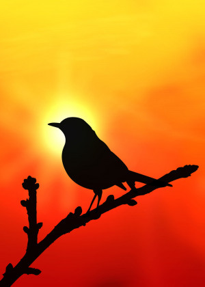 Bird Silhouette by bigheadkyle2