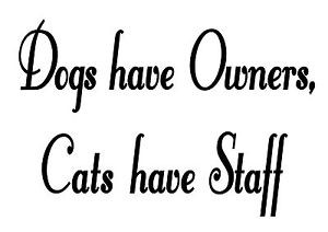... -HAVE-OWNERS-CATS-HAVE-STAFF-FUNNY-CUSTOM-VINYL-WALL-DECAL-QUOTE-PETS