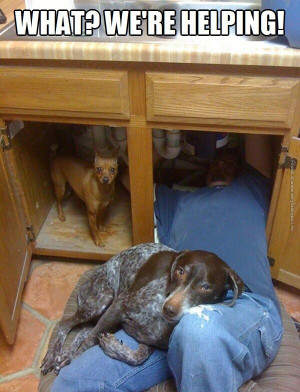 funny pics dogs helping with plumbing
