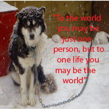 Stop Animal Abuse Quotes
