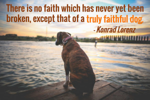 25 Dog Quotes (With Pictures)!
