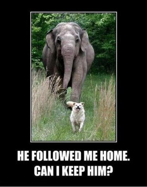 funniest dog and elephant pictures, funny dog and elephant pictures