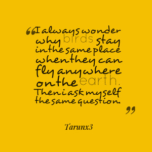 Quotes Picture: i always wonder why birds stay in the same place when ...