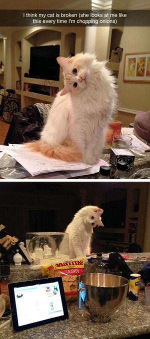 Funny Cat vs Rat