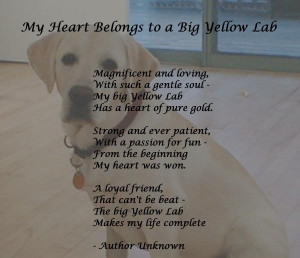 My yellow lab has my heart!