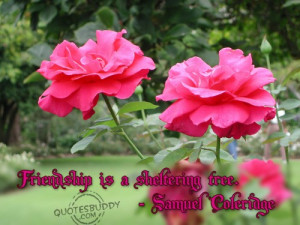 Friendship is a sheltering tree ~ Friendship Quote