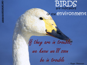 Birds Are Indicators Of The Environment Nature Quote