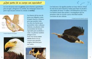birds of prey quotes