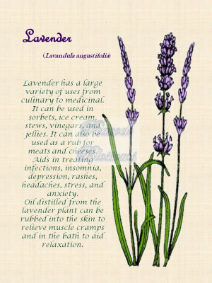 Botanical herbal decor, lavender. Printed on 8.5 x 11 canvas and ...