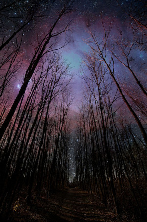Funny photos beautiful night sky woods stars