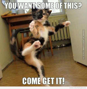 Funny Picture - Cocky cat - Karate cat - You want some of this?