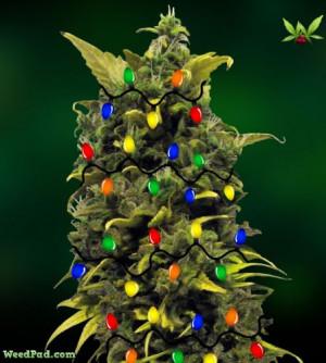 Christmas Weed Wallpaper