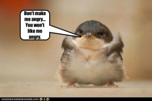 funny and cute animal , LOL, ROFL,facebook, laughs, images, pictures ...