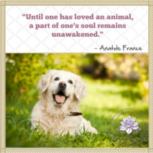 These loss of pet quotes are dedicated to all the people who have lost ...