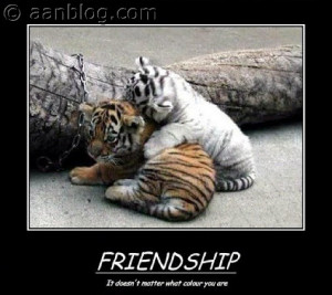 Friendship-Quotes-It-does-not-matter-what-color-you-are-funny-picture