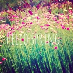 Hello Spring #desideratabytanyacooper #quote More