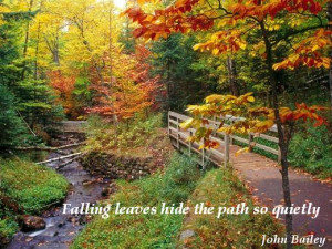 Fall Leaves Quotes Falling leaves hide the path