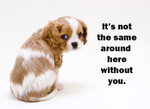 Miss You Puppy eCard