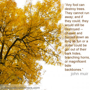 Favorite John Muir Quotes: Fools and Trees