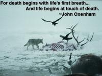 Inspirational Quotes Wildlife