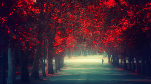trees autumn (season) red leaves Remembrance wallpaper background