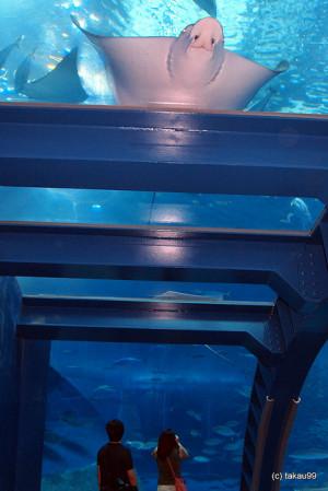 Okinawa Churaumi Aquarium – Japan is creative inspiration for us ...