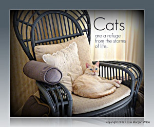 cats-quote-refuge-cat wisdom 101