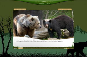 This comprehensive , easy-to-use on-line bear essentials program
