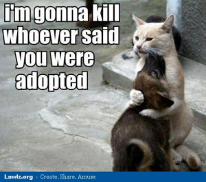 Funny Cat And Dog Pictures With Quotes Funny Cat and Dog Sayings