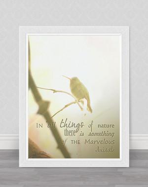 Pastel hummingbird photography, home decor / wall decor nature ...