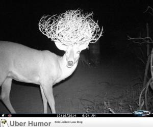 My buddy's motion sensor camera captured this stylish deer.