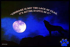 lone wolf dies but the lone wolf quotes about strength lone wolf ...