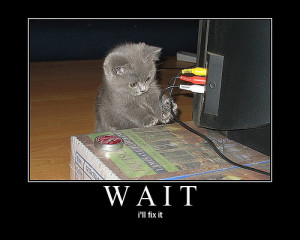 Funny Cat Pictures - animal-humor Photo
