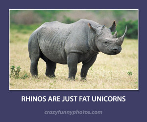 rhinos are fat unicorns funny