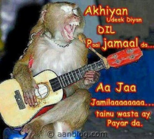 Famous Pakistani Love Song Sing by A Monkey. Funny song by monkey ...