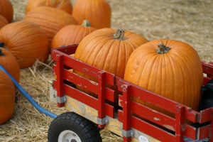 PB Pumpkin Patches has two locations, La Jolla and Pacific Beach ...