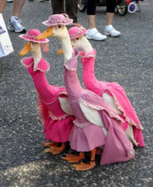 funny geese funny geese