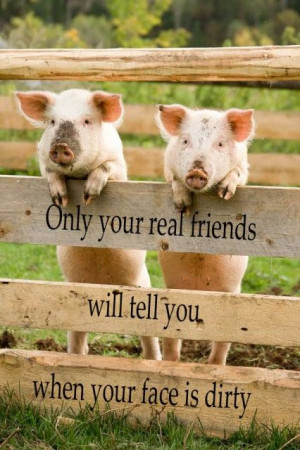 ... , Farms, Pigs, Real Friends, True Stories, Animal, Friends Quotes