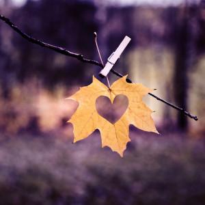 love autumn ( flickr )
