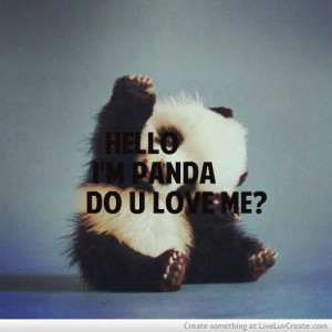 ... , do you love panda, love, panda animal cute, pretty, quote, quotes