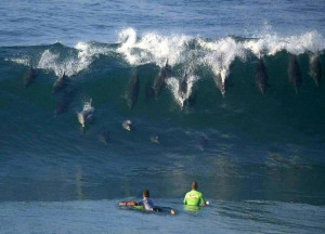 Funny Surfing (48)
