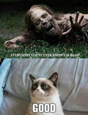 Angry Cat memes very funny 2013 funny